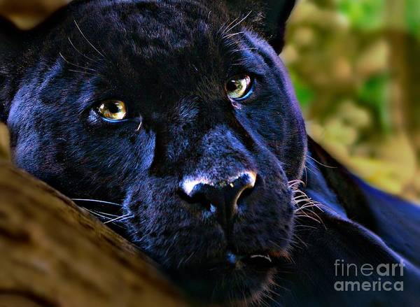 Black Panther Mixed Media - Panther Chilling Out by Wbk