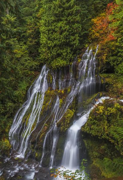 Photograph - Panther Creek Falls by Loree Johnson