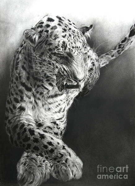 Fur Coat Drawing - Panthera Pardus 1 by Odile Kidd
