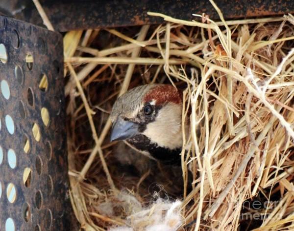 Photograph - Papa Bird by Cindy Schneider