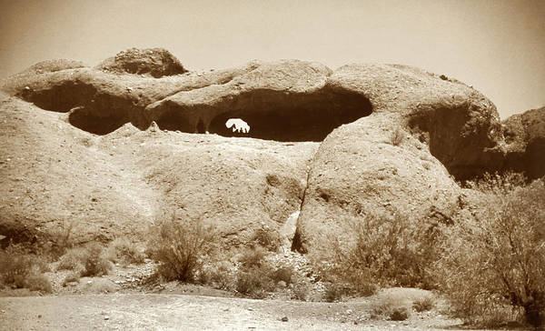 Photograph - Papago Park 1950 With Horse by Marilyn Hunt