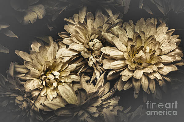 Posies Photograph - Paper Flowers by Jorgo Photography - Wall Art Gallery