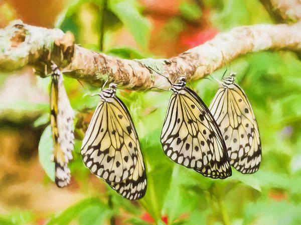 Photograph - Paper Kite Butterflies by Robin Zygelman