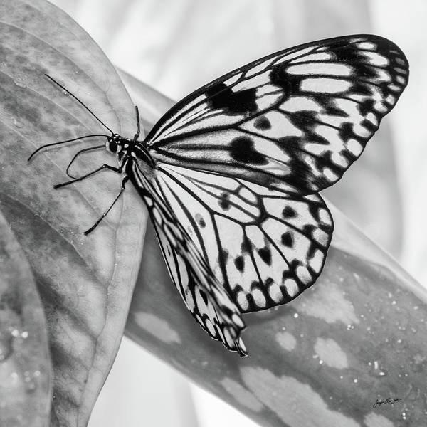 Kite Photograph - Paper Kite by Jurgen Lorenzen