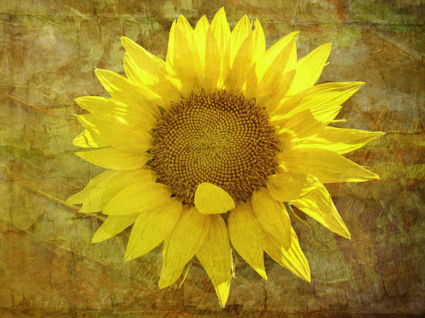 Photograph - Paper Sunshine by Melinda Ledsome