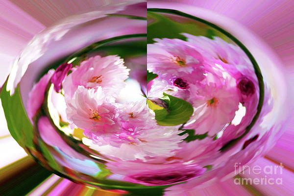 Photograph - Paperweight Cherry Blossoms by Patti Whitten