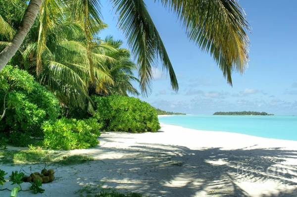 Photograph - Paradise Beach by David Birchall