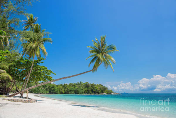 Coconut Trees Photograph - Paradise Beach by Delphimages Photo Creations