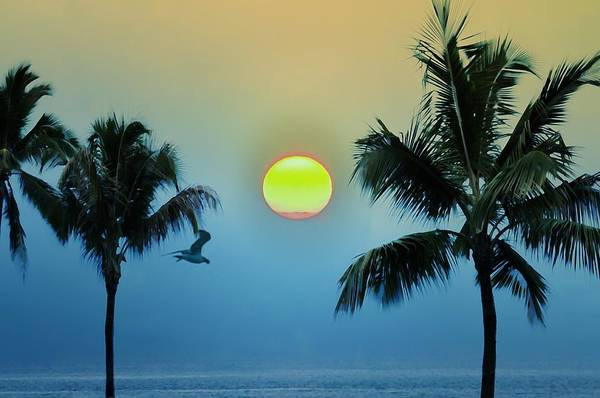 Photograph - Paradise by Bill Cannon