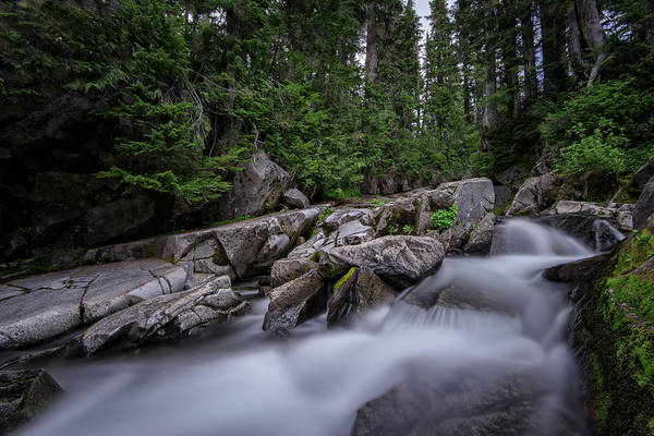Photograph - Paradise Creek Mount Rainier by Rick Berk