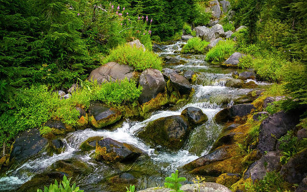 Photograph - Paradise River Mt Rainier by Greg Reed