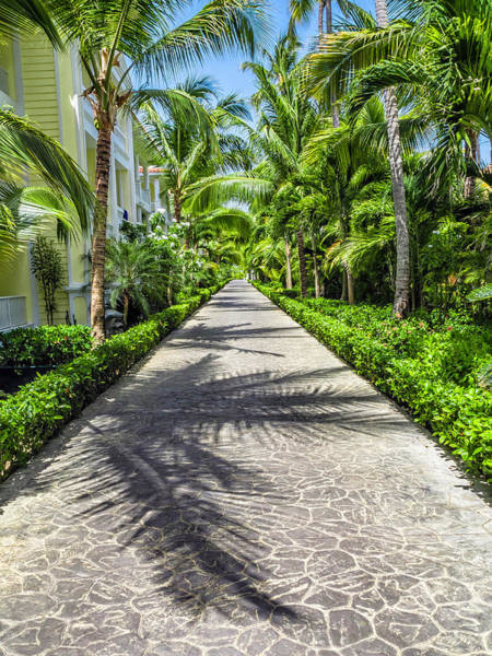 Photograph - Paradise Walk by Nick Bywater