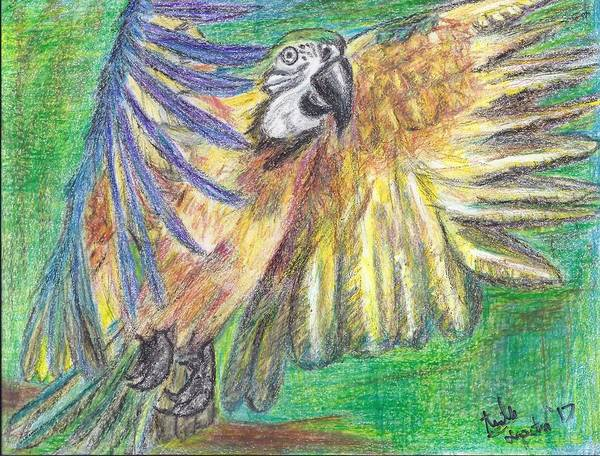 Green Parrot Drawing - Paradiso by Arielle Terpstra