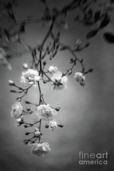 Photograph - Parallel Botany #0014 by Andrey Godyaykin