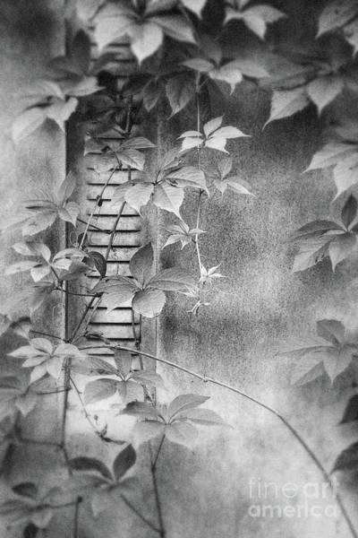 Photograph - Parallel Botany #0810 by Andrey Godyaykin