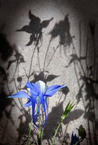 Photograph - Parallel Botany #5148 by Andrey Godyaykin