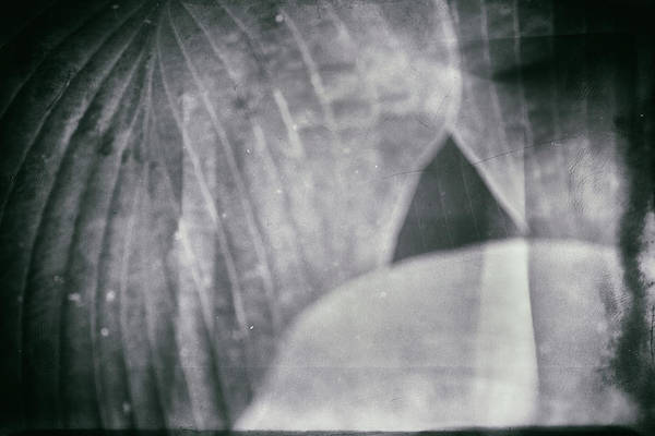 Photograph - Parallel Botany #5155 by Andrey Godyaykin