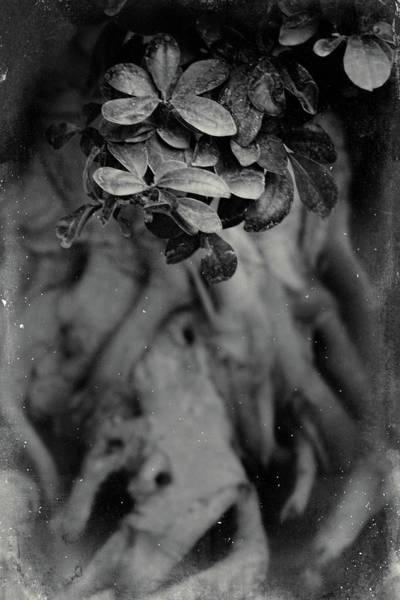 Photograph - Parallel Botany #5175 by Andrey Godyaykin