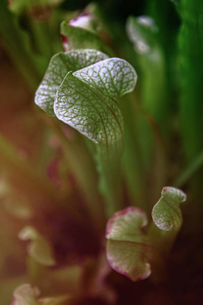 Photograph - Parallel Botany #5206 by Andrey Godyaykin