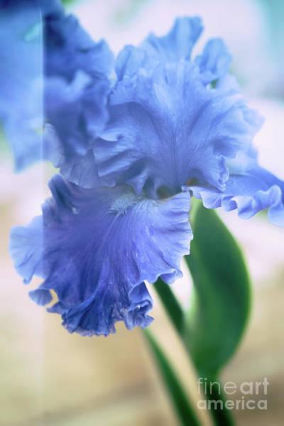 Photograph - Parallel Botany #5254 by Andrey Godyaykin