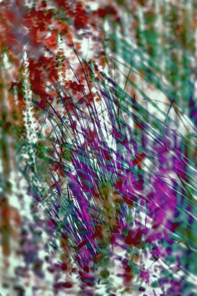 Photograph - Parallel Botany #7516 by Andrey Godyaykin