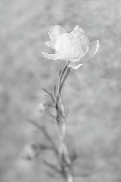 Photograph - Parallel Botany #7524 by Andrey Godyaykin