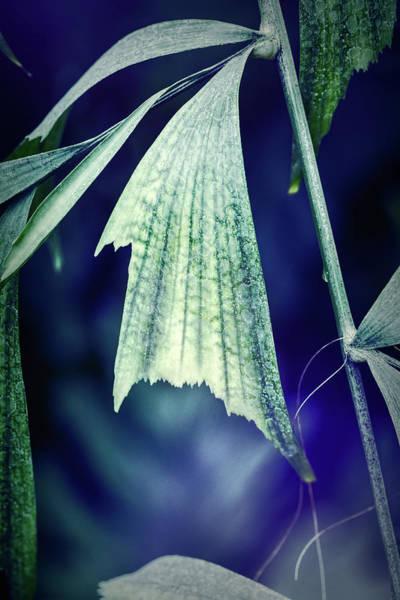 Photograph - Parallel Botany #8383 by Andrey Godyaykin