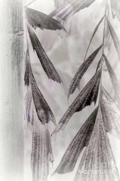 Photograph - Parallel Botany #8386 by Andrey Godyaykin