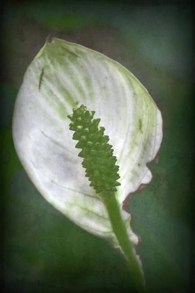 Photograph - Parallel Botany #8395 by Andrey Godyaykin