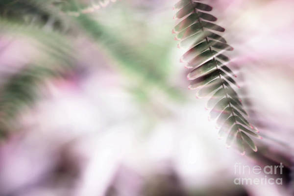 Photograph - Parallel Botany #8418 by Andrey Godyaykin