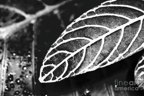 Photograph - Parallel Botany #8444 by Andrey Godyaykin