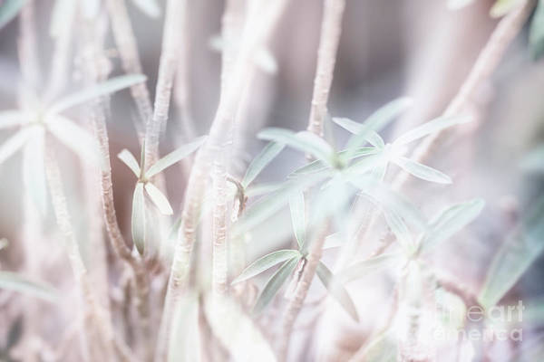 Photograph - Parallel Botany #8454 by Andrey Godyaykin