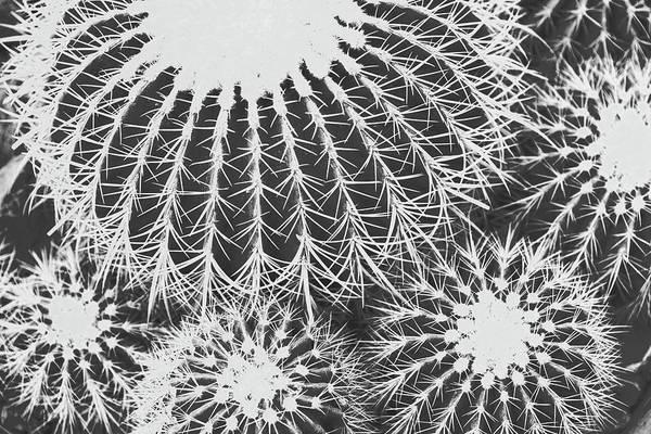 Photograph - Parallel Botany #8455 by Andrey Godyaykin