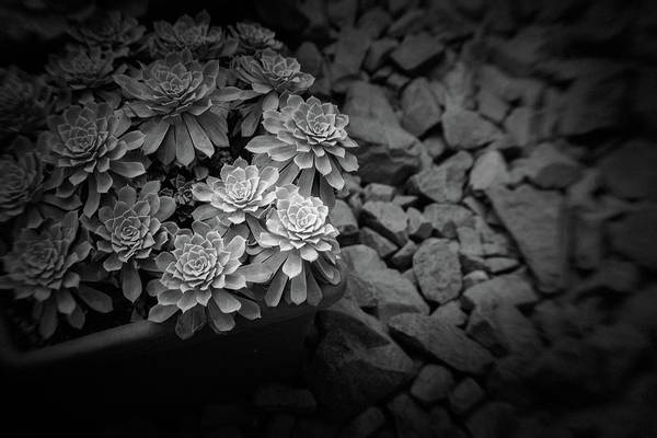 Photograph - Parallel Botany #8474 by Andrey Godyaykin