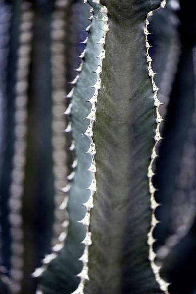 Photograph - Parallel Botany #8485 by Andrey Godyaykin