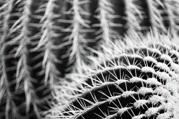 Photograph - Parallel Botany #8488 by Andrey Godyaykin