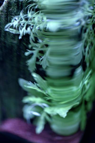 Photograph - Parallel Botany #8492 by Andrey Godyaykin
