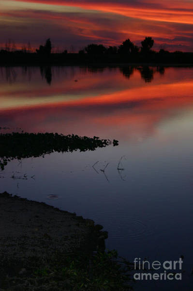 Parana Sunset Art Print
