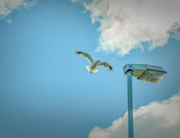 Photograph - Parent Protection 3 #g4 by Leif Sohlman