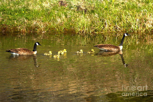 Photograph - Parental Swimming Lessons by Adam Jewell
