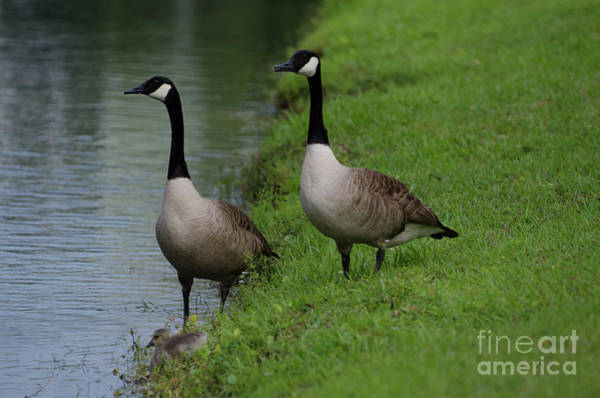 Photograph - Parental Watch by Dale Powell