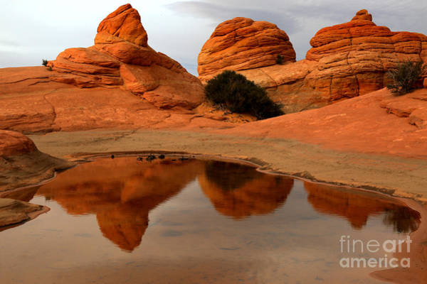 Photograph - Paria Wilderness Oasis by Adam Jewell