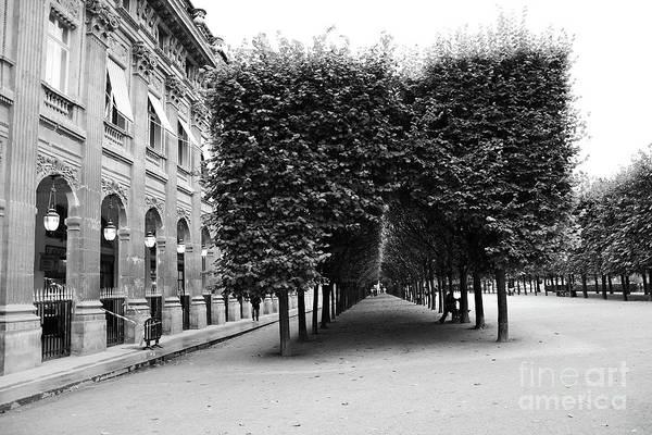Palais Photograph - Paris Palais Royal Gardens Row Of Trees - Palais Royal Architecture Trees Landscape by Kathy Fornal