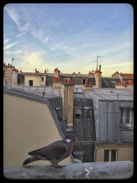 Photograph - Paris Rooftop Pigeon by Frank DiMarco