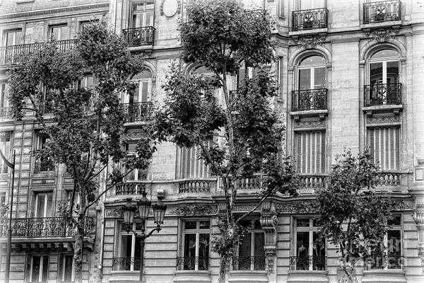 Photograph - Paris Trees And Balconies Black And White by Carol Groenen