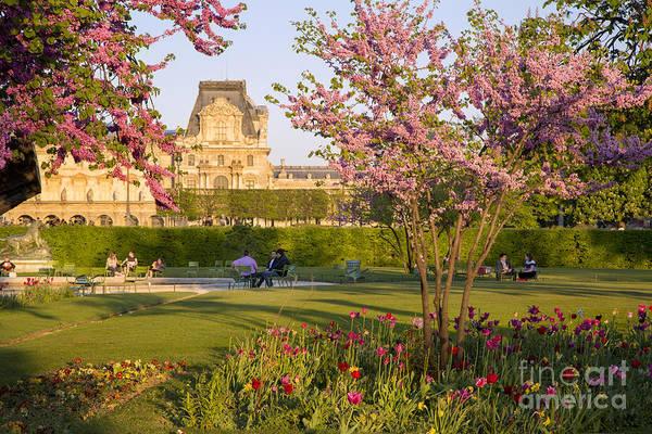 Jardin Des Tuileries Photograph - Parisian Spring by Brian Jannsen