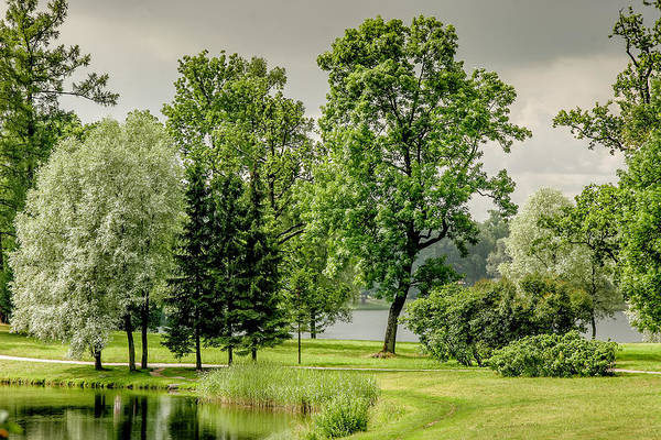 Photograph - Park At Catherine's Palace by KG Thienemann