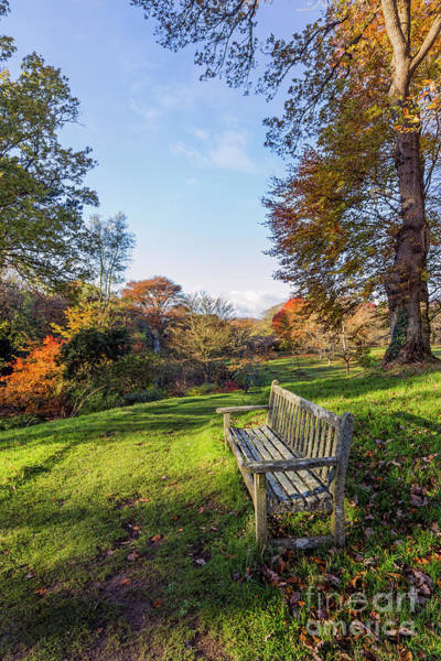Photograph - Park Bench by Ian Mitchell