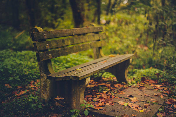 Park Bench Photograph - Park Bench by Shane Holsclaw