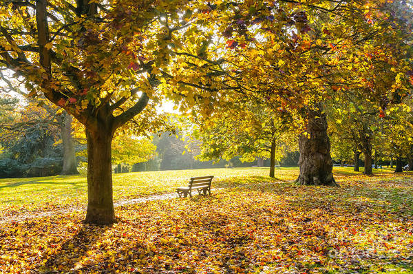 Photograph - Victoria Park, Bath, In Autumn by Colin Rayner